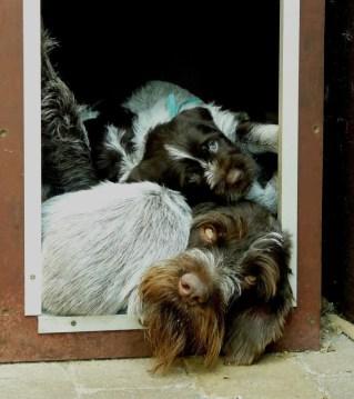 Met de pups van Storm