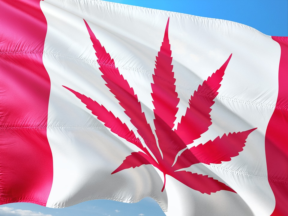 Empresa de Canadá quiere usar blockchain para el suministro de cannabis