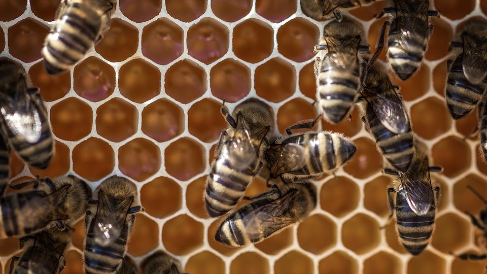 "S. Korea battles a ""beehive account"" boom"