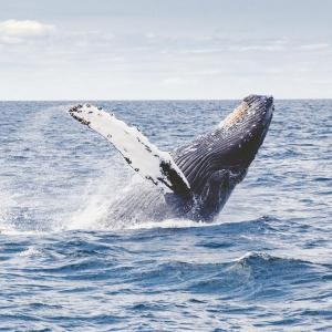 Whales trade big despite stagnant Bitcoin market