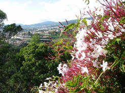 Madeira_23