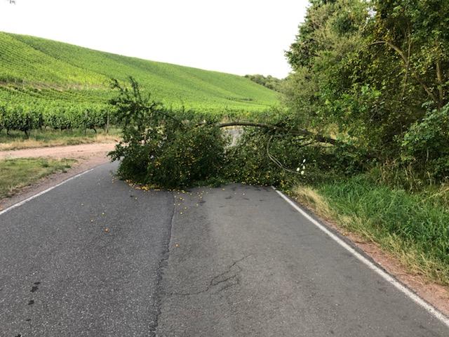 20190724_umgestürzter Baum Mandel (14)