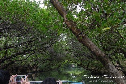 """We came to this place to ride the small boat you saw in the previous picture. It takes a short trip into the mangroves, where one can find four different kinds of plants (hence its name """"Si Cao"""")."""