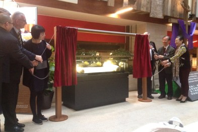 Unveiling the beautiful scroll, which had miraculously survived the Holocaust in Europe.