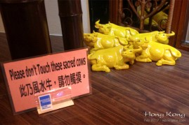 "This week, we had dinner at an Indonesian restaurant, with some friends visiting from abroad. I couldn't resist taking this photo. In English, the idiom ""sacred cow"" refers to practices that should not be questioned--though in many cases, they really need to be ""touched""! (Now I know where the idiom came from.)"