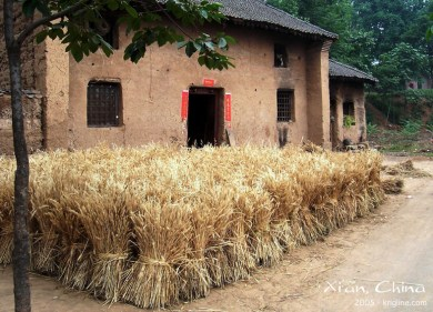 What a beautiful country scene, of recently harvested wheat, ready to be threshed!