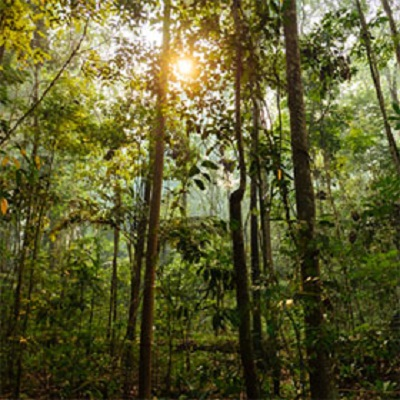A multi-scale assessment of the regrowth potential of secondary forests in the Brazilian Amazon
