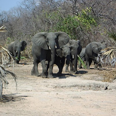 Are land-use decisions of African elephants based on environmental geochemistry 400 x 400 px