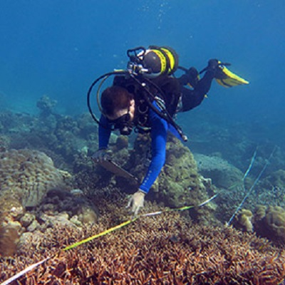 Capturing ecosystem service delivery from coral reefs 400 x 400 px