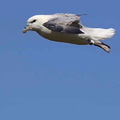 Demographic consequences of variation in individual foraging strategies of northern fulmars