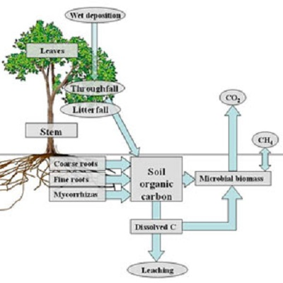 Investigating the role of soil microbes and rhizodeposition in carbon cycling and long-term C sequestration of forest ecosystems 400 x 400 px