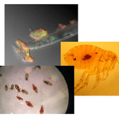 Testing climatic causes of historical plague outbreaks using experimental microbiology and palaeobiogeographical modelling