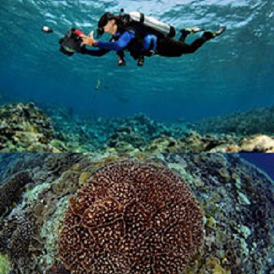 Widening our view of the reef the landscape ecology of disturbance and recovery on Pacific coral reefs