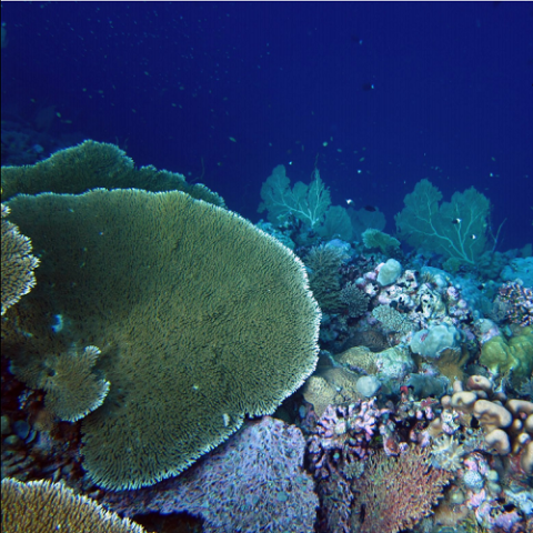 Confronting the Changing Diversity Patterns of Coral Reefs