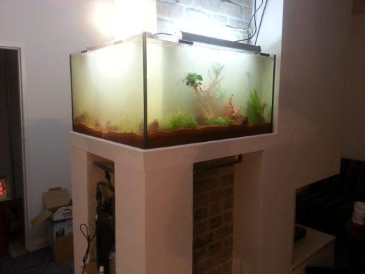 Aquarienplanung Aquarienbau