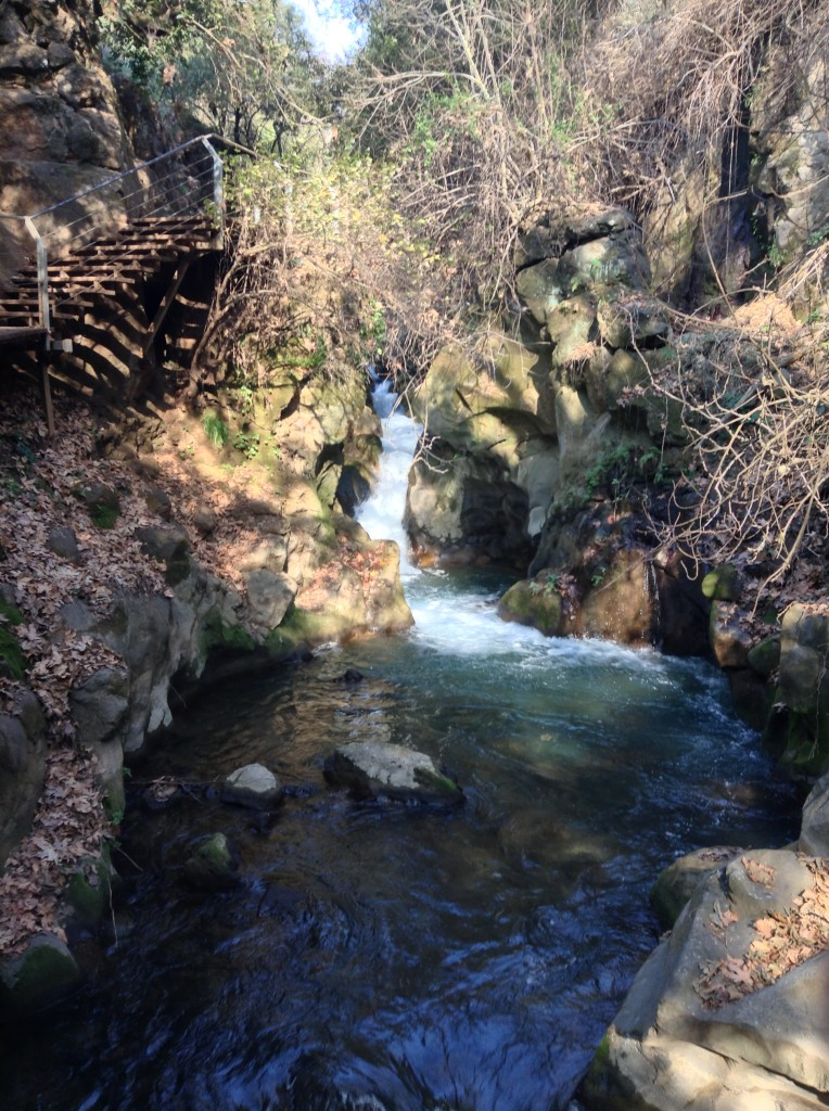 Stream at Banias.