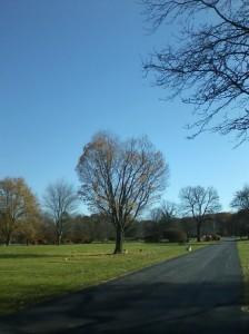 The Heart Tree at White Haven Memorial Park, November 3, 2015