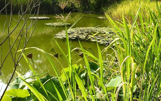 The Lotus Pool, By Rafael Matysiuk (Own work) [CC0], via Wikimedia Commons