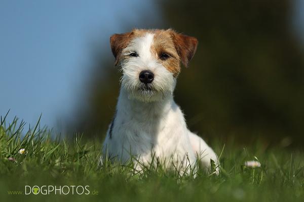 dogphotos-finn_004