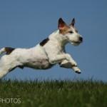 dogphotos-finn_006