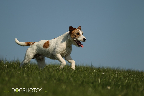 dogphotos-louie_008