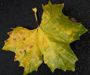 2016-44: Herbstformen