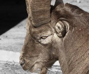 2016-46: Seelenruhe im Tierpark