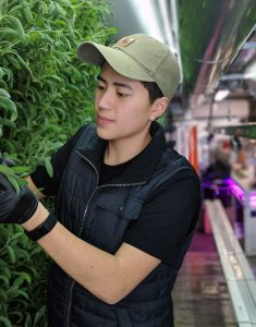 Micah Helle examines plants in an indoor farming facility.