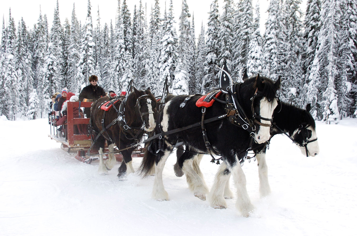 https://i0.wp.com/wp.stu.ca/wellness/wp-content/uploads/sites/17/2014/11/Horse-Sleigh-Rides.jpg