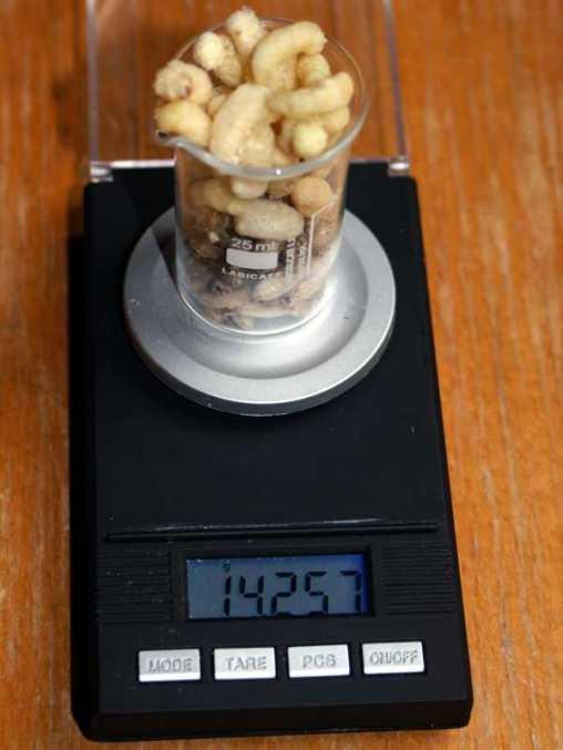 Tagesration für eine Amsel von 35 Gramm Körpergewicht, © Anke Dornbach