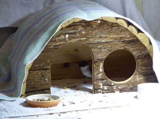 Kleintierhäuschen sind ideale Rückzugsorte, © N.K und T.K.