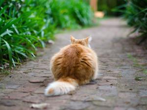 Hauskatzen sind bezaubernde Tiere, aber sie sind auch natürliche Feinde von Vögeln, sodass in Gärten mit Hauskatzen kaum erfolgreiche Vogelbruten stattfinden, © Unsplash / Pixabay