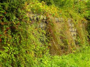 Wilde Hecke und Steinmauer, © music4life / Pixabay