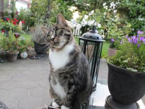 Terrassen und Gärten ziehen oft auch Freigänger-Katzen aus der Nachbarschaft magisch an, was für die Wildvögel leider oft problematisch ist. © Geisteskerker / Pixabay