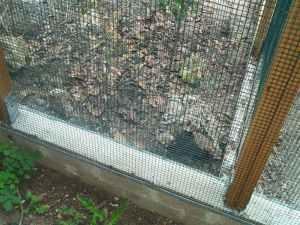 In die Erde eingearbeitete Mauer, an der beidseitig Gitter angebracht wurde, bietet sicheren Schutz vor Fressfeinden, © Anke Dornbach