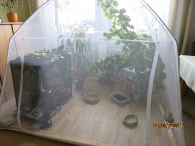 Unter einem Moskitonetz können zum Beispiel flügge Schwalben untergebracht werden, © Monika Sattler