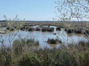 Auf Mallorca bietet unter anderem das Schutzgebiet S'Albufera vielen Zugvögeln gute Bedingungen für die Überwinterung, © Jari via Flickr