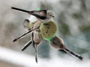 Eine Schwanzmeise kommt selten allein zum Futterplatz - diese Vögel fressen Meisenknöden und Co. am liebsten in kleinen Gruppen, © Lothar Brockmöller via naturgucker.de