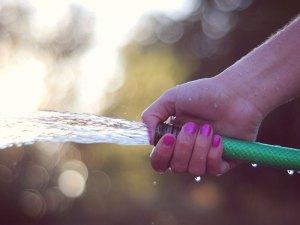 Mit Wasser lassen sich viele Hauskatzen aus Gärten vertreiben, ohne dass man die Tiere verletzt, © Amy Stanley via Flickr