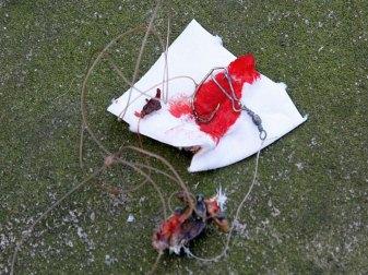 Muss ein Angelhaken aus der Haut eines Vogels gezogen werden, ist das meist eine blutige Angelegenheit. © Paasmühle