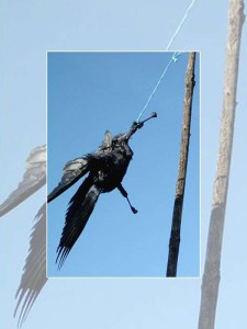 Erhängte Krähe, © Elli Heß