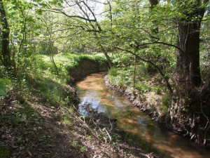 Fließt ein Bach durch ein Grundstück, kann man einen Gartenteich damit verbinden und sorgt so dafür, dass dieser immer frisches Wasser erhält, © Gaby Schulemann-Maier