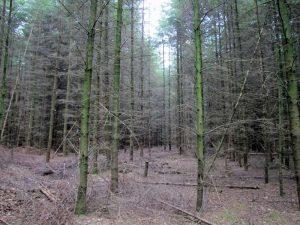 Was wir heute als 'Wald' bezeichnen, hat diesen Namen oft nicht verdient. © Gaby Schulemann-Maier