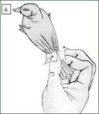 Abb. 4: Den Klebestreifen kurz andrücken - fertig ist die Flügelfixierung.