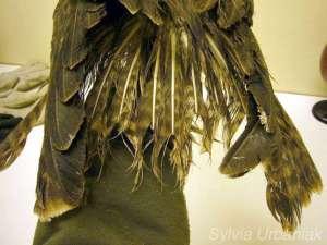Gefiederverschleiß: Gefiederschaden bei einem Mäusebussard, © Greifvogelhilfe.de