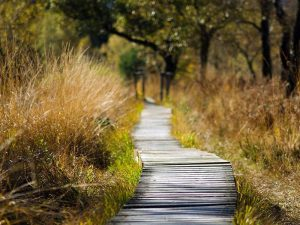 Holzsteg in einem geschützten und empfindlichen Biotop, © smellypumpy / Pixabay