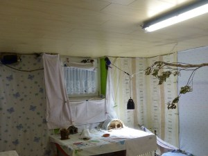 Blick in ein vorbildlich eingerichtetes Zimmer für Schwalben, © N.K und T.K