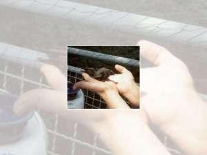 Mauersegler Piep wird in die Freiheit entlassen, © Angelika Blum