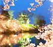 高田城百万人観桜会は日本三大夜桜の一つ