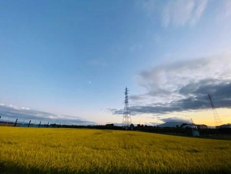 超広角で撮影した田んぼ